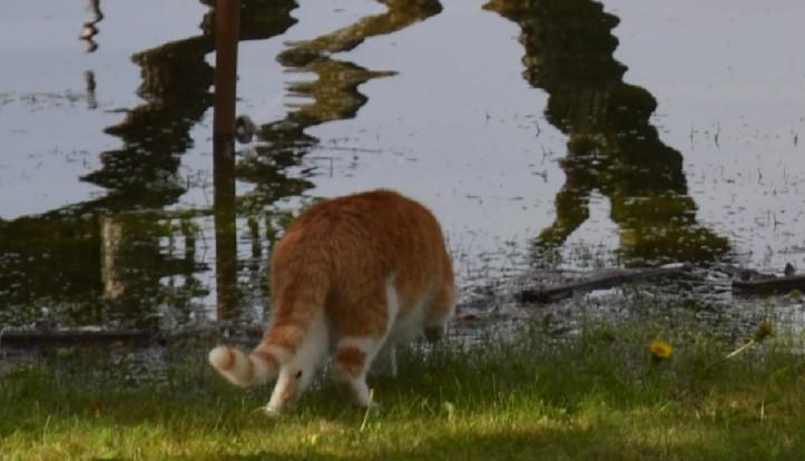cat2_ermatingen